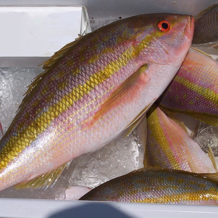 Yellow Tail Snapper Fillets